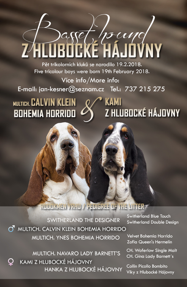 bassethound štěňata